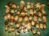 funghi-12-10-12-2