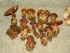 funghi-25-ottobre-2012-2