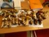 funghi-8-10-12-001