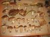tanti-funghi