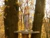 Madonna del Bosco