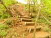 la scala nel bosco